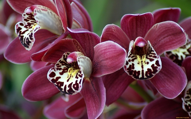 Магический смысл орхидеи. Почему волшебный цветок должен быть в вашем доме?