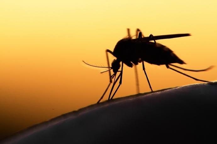 11 простых способов избавиться от комаров. Прощайте, летающие кровососы!