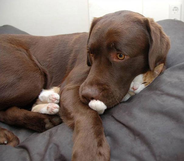 Мне здесь удобно! Кошки, которые улеглись спать в невероятных позах