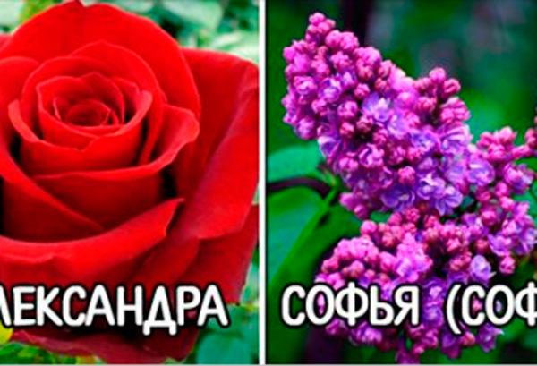 Цветок вашего имени: узнайте, какой цветок вам подходит!