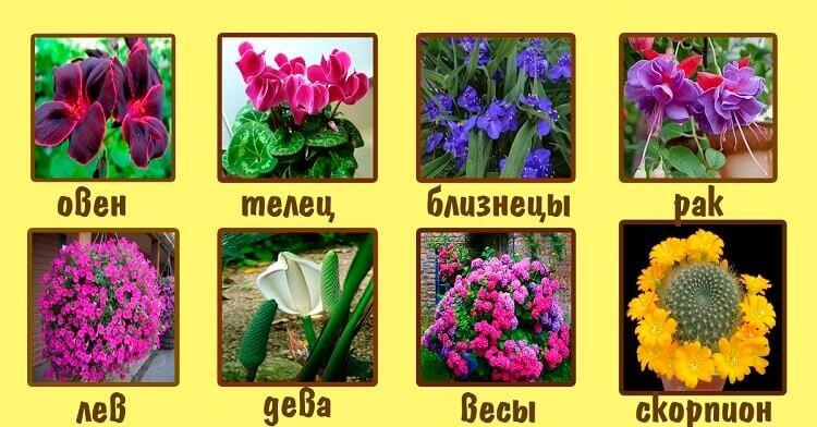 Комнатные цветы для тельца женщины