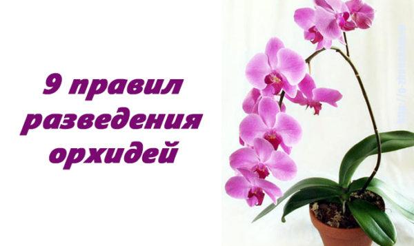 9 хитростей, которые помогут твоей орхидее цвести круглый год!