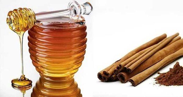 Мед и корица: что будет, если есть их каждый день?