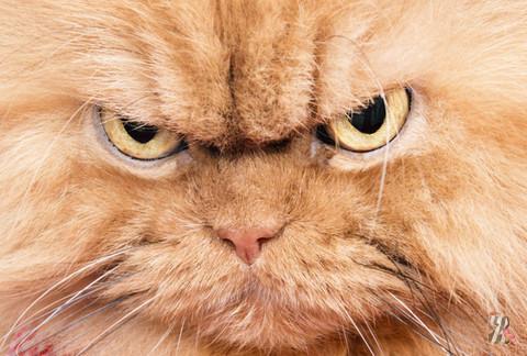 Как кошка оповещает хозяина о негативе в доме?