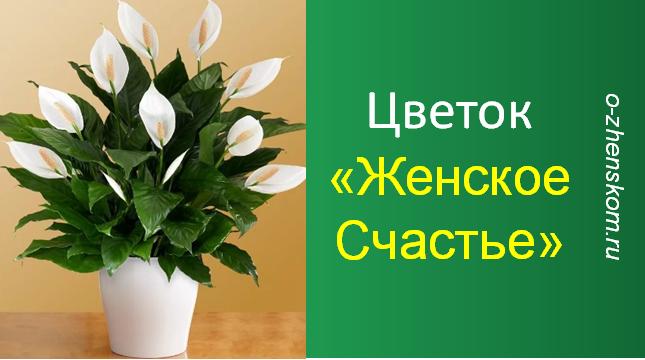 """Недаром этот цветок называют """"Женское счастье""""..."""