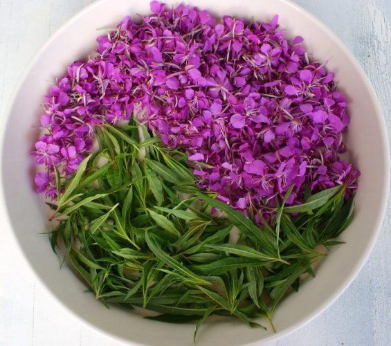 Какие травы полезны, какие наносят непоправимый вред - Лидия Сурина, сибирская ученая-травница дает советы!