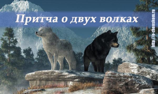 Притча о двух волках: 20 секунд, которые навечно врежутся в вашу память...
