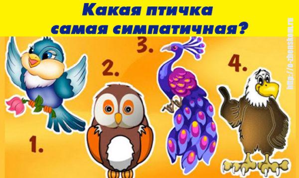 Тест: какая птичка самая симпатичная на ваш взгляд?