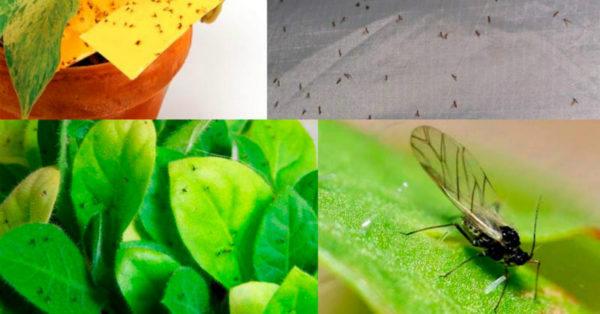 Так вот для чего цветоводы втыкают спички в горшки с растениями!