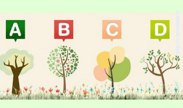 Тест: выберите дерево и узнайте слово, которое вас характеризует!