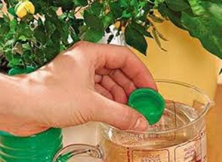7 способов, которые помогут растениям цвести по-бешеному - флористы рекомендуют!