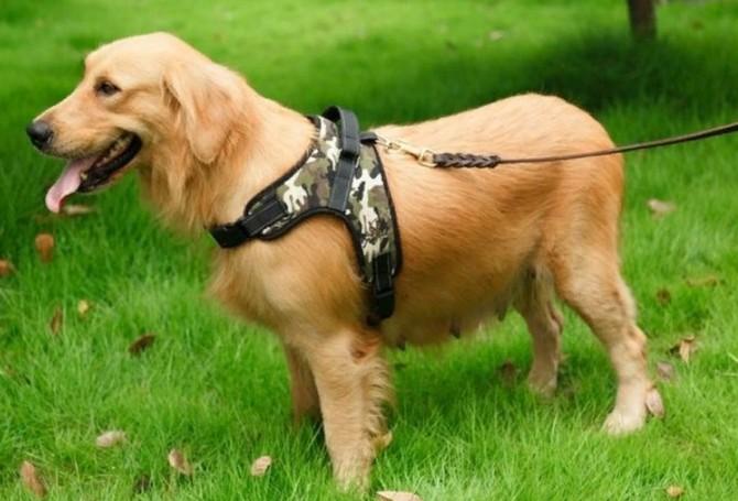 6 необычных, но полезных вещей для собак. Где купить шлейку для собаки, тёплый комбинезон или антицарапки?