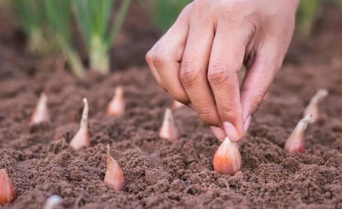 «Удачу - в сад и на дачу!»: 3 полезных и простых обряда на урожайный год