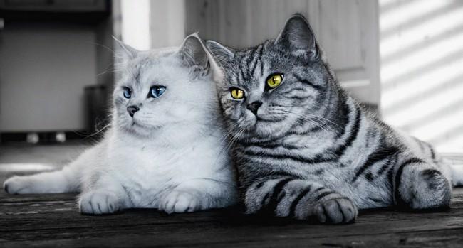 10 причин, почему владельцы кошек часто имеют лучшее здоровье